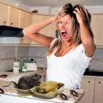 ¿Cuando llegan las Plagas a tu casa? Prepárate!