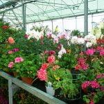 Decore su jardín con algunos consejos prácticos