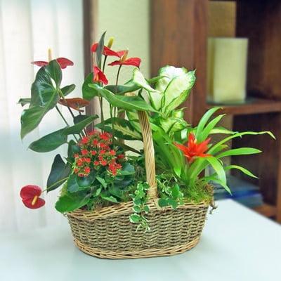Decore con plantas elija el plan adecuado para cada for Decoracion de casas con plantas naturales