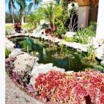 Mantenimiento Estacional recomendable para el Jardín Acuático de su patio