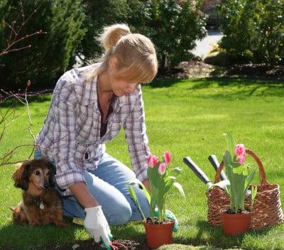 Jardines tareas que realizar antes de primavera ideas for Jardines de primavera