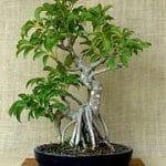 Decoración con plantas: Viva en un ambiente saludable!