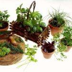 Tenga un jardín de hierbas en casa