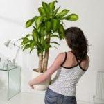 Como aprovechar la energía y frescura de las plantas de nuestras casas