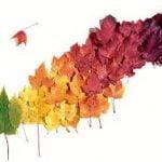 Los diez colores de otoño  para dar vida a sus paredes – Parte I